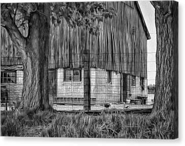 Rain Barrel Canvas Print - Barnyard 2 - Paint Bw by Steve Harrington