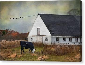 Barnyard Bliss Canvas Print by Robin-Lee Vieira