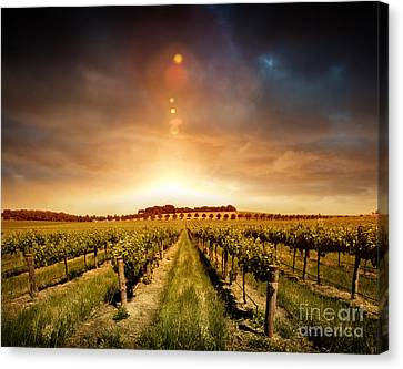 Canvas Print featuring the photograph Barossa Vineyard by Boon Mee