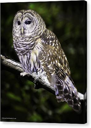 Barred Night Owl Canvas Print