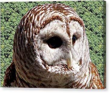 Barred Owl 2 Canvas Print by Rose Santuci-Sofranko