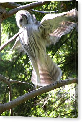 Barred Owl Angelic Liftoff Canvas Print