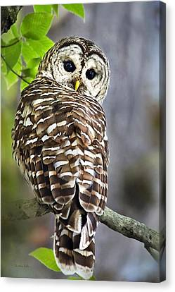 Canvas Print featuring the photograph Barred Owl by Christina Rollo