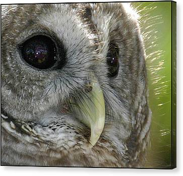 Canvas Print featuring the photograph Barred Owl  by Geraldine Alexander