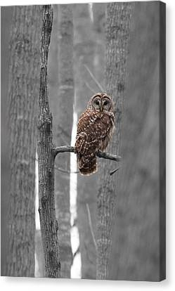 Barred Owl In Winter Woods #1 Canvas Print by Paul Rebmann