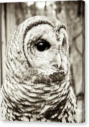 Barred Owl Canvas Print by Olivia StClaire