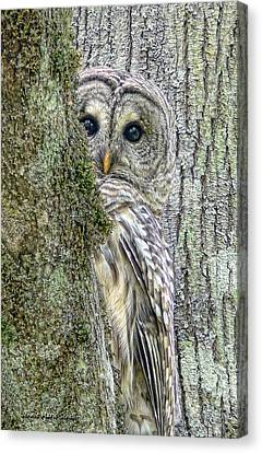 Canvas Print featuring the photograph Barred Owl Peek A Boo by Jennie Marie Schell