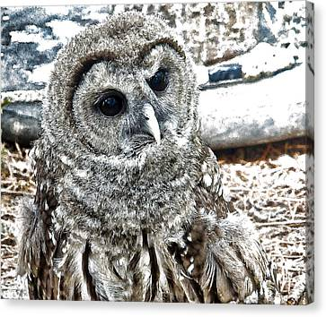 Canvas Print featuring the photograph Barred Owl Photo Art by Constantine Gregory