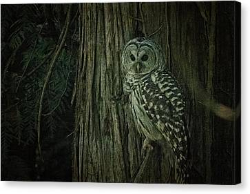 Canvas Print - Barred Owl by R J Ruppenthal