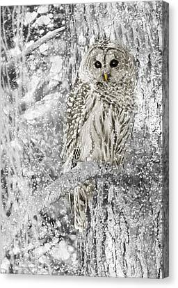 White Birds Canvas Print - Barred Owl Snowy Day In The Forest by Jennie Marie Schell