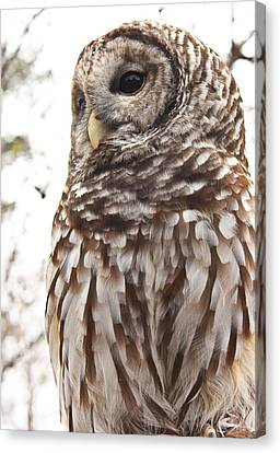 Canvas Print featuring the photograph Barred Owl by Tammy Schneider