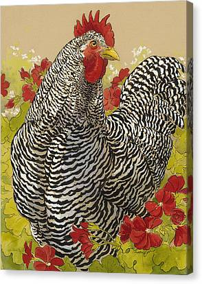 Barred Rock Rooster In The Geraniums Canvas Print by Tracie Thompson