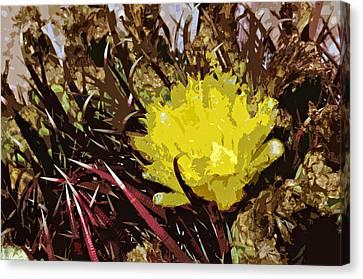 Barrel Cactus Bloom Canvas Print by Jack McAward