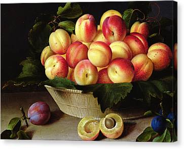 Basket Of Apricots Canvas Print by Louise Moillon