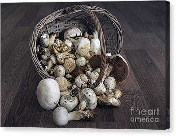 Basket Of Mushrooms Canvas Print by Svetlana Sewell