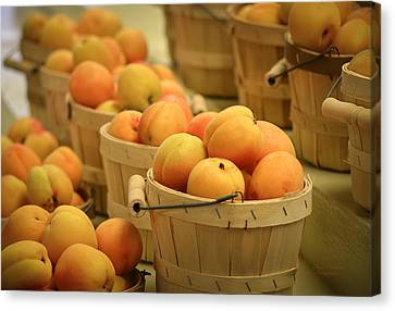 Baskets Of Apricots Canvas Print by Julie Palencia