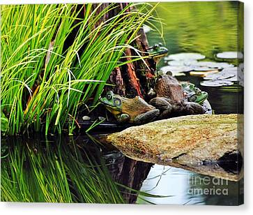 Basking Bullfrogs Canvas Print by Angela Murray