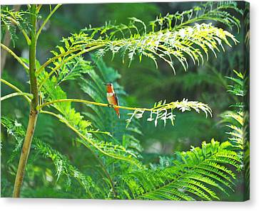 Basking In The Morning Light Canvas Print by Lynn Bauer