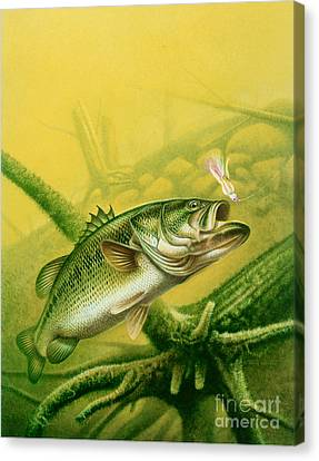 Bass And Jig Canvas Print by jon Q Wright