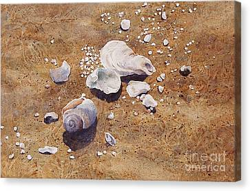 Canvas Print featuring the painting Bass River Seashells by Karol Wyckoff