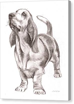 Canvas Print featuring the drawing Basset Hound Dog by Nan Wright