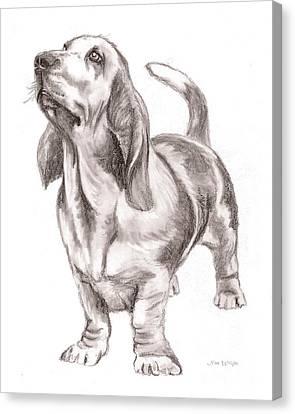 Basset Hound Dog Canvas Print