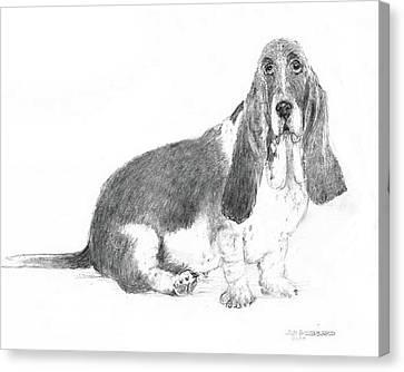 Basset Hound Canvas Print by Jim Hubbard