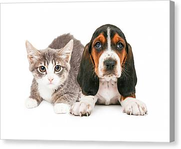 Basset Hound Puppy And Kitten Canvas Print