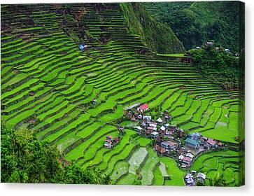 Batad Rice Terraces, World Heritage Canvas Print by Michael Runkel