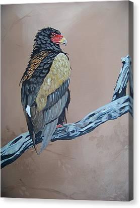 Bateleur Canvas Print by Robert Teeling