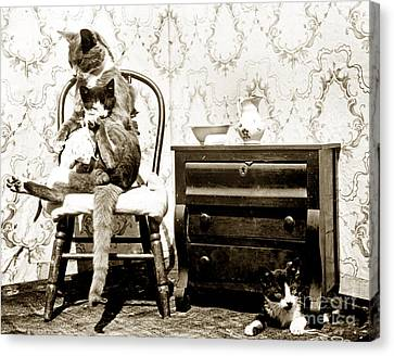 Canvas Print featuring the photograph Bath Time For Kitty Circa 1900 Historical Photos by California Views Mr Pat Hathaway Archives