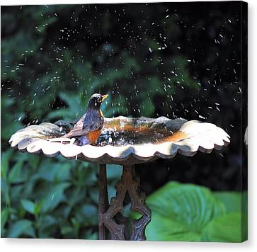 Bath Time Canvas Print by Katherine White