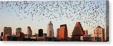 Bats Over Austin Panoramic Canvas Print by Randy Smith