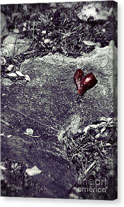Battlefield Of Love Canvas Print by Trish Mistric