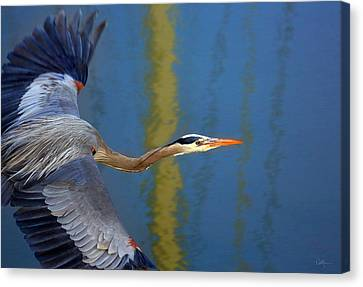 Bay Blue Heron Flight Canvas Print by Robert Bynum