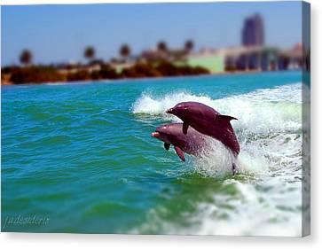 Bay Dolphins Canvas Print