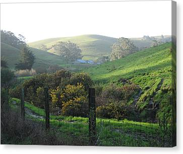 Bay Hill Road Canvas Print