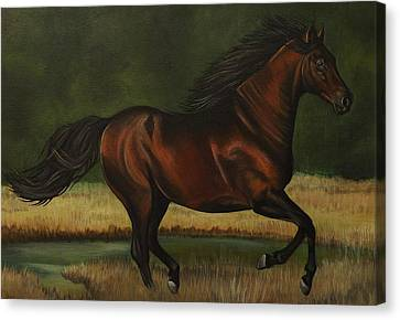 Dark Horse Canvas Print by Lucy Deane