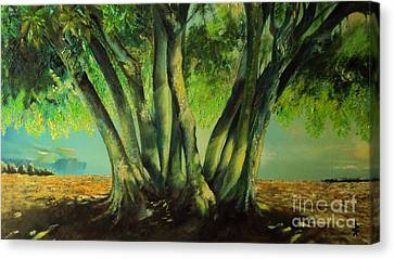 Bay Leaves Tree Canvas Print