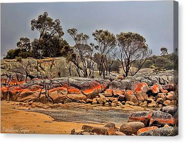 Bay Of Fires 2 Canvas Print by Wallaroo Images