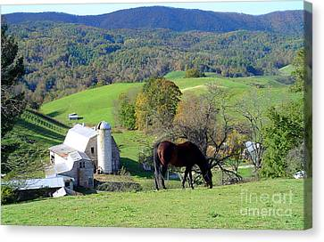 Bay On The Hill Canvas Print