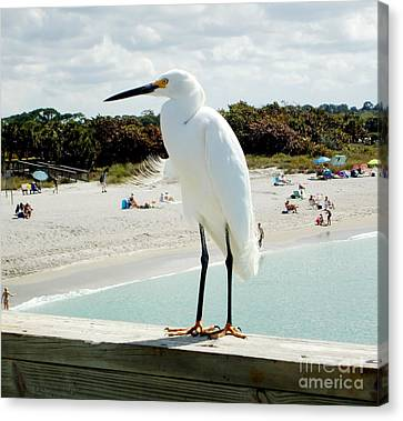 Bay Watch Canvas Print by Ann Johndro-Collins