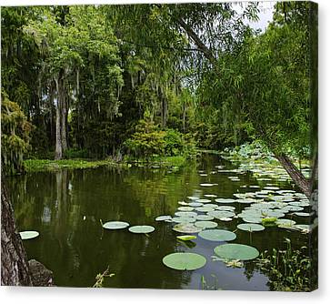 Canvas Print featuring the photograph Bayou Lushness by Rhonda McDougall