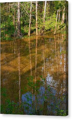 Bayou Reflections Canvas Print