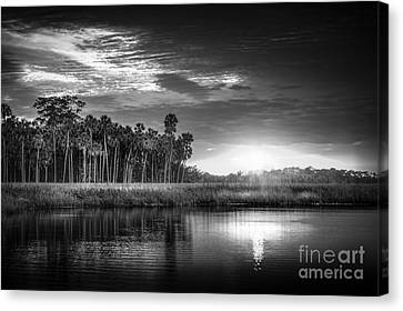 Bayou Sunset-b/w Canvas Print