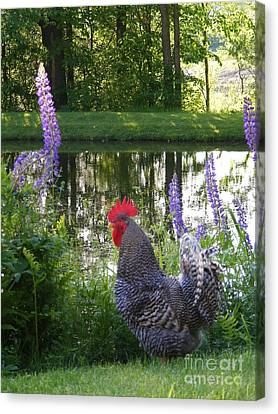 Bb The Rooster And Lupine Canvas Print