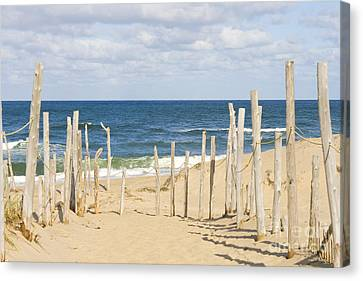 Beach At Cape Cod Canvas Print by Patricia Hofmeester