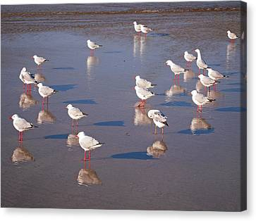 Canvas Print featuring the photograph Beach Birds 2 by Ankya Klay