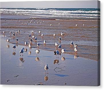 Canvas Print featuring the photograph Beach Birds 4 by Ankya Klay