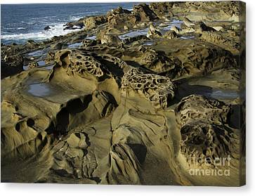 Visions Of Nature 3 Canvas Print by Bob Christopher